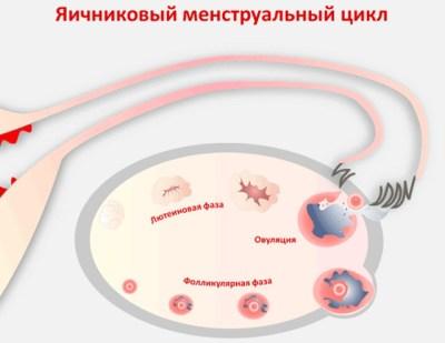 боли в яичниках после месячных