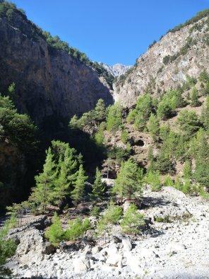 Les arbres apportent des touches vertes dans le paysage