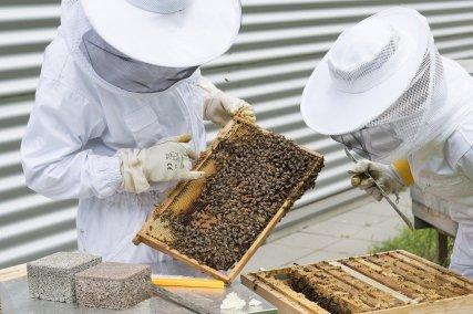 Apiculteurs observant une ruche dans un rucher école