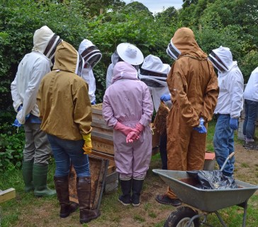 apprendre apiculture