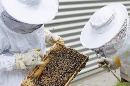 ruche apiculteurs amateurs