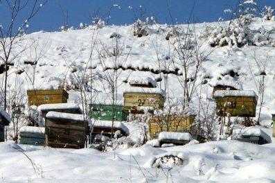 ruches neige