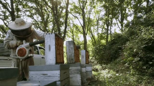 souffleur abeilles