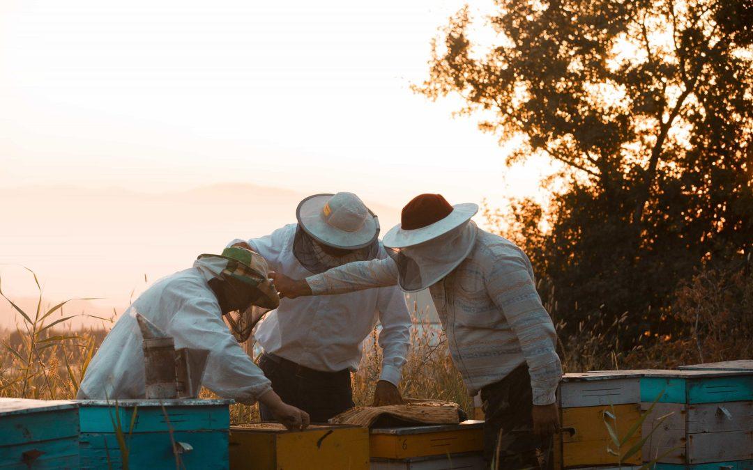 Lancement de la première conférence ClubHouse sur l'apiculture et les abeilles + J'offre 5 invitations ClubHouse!