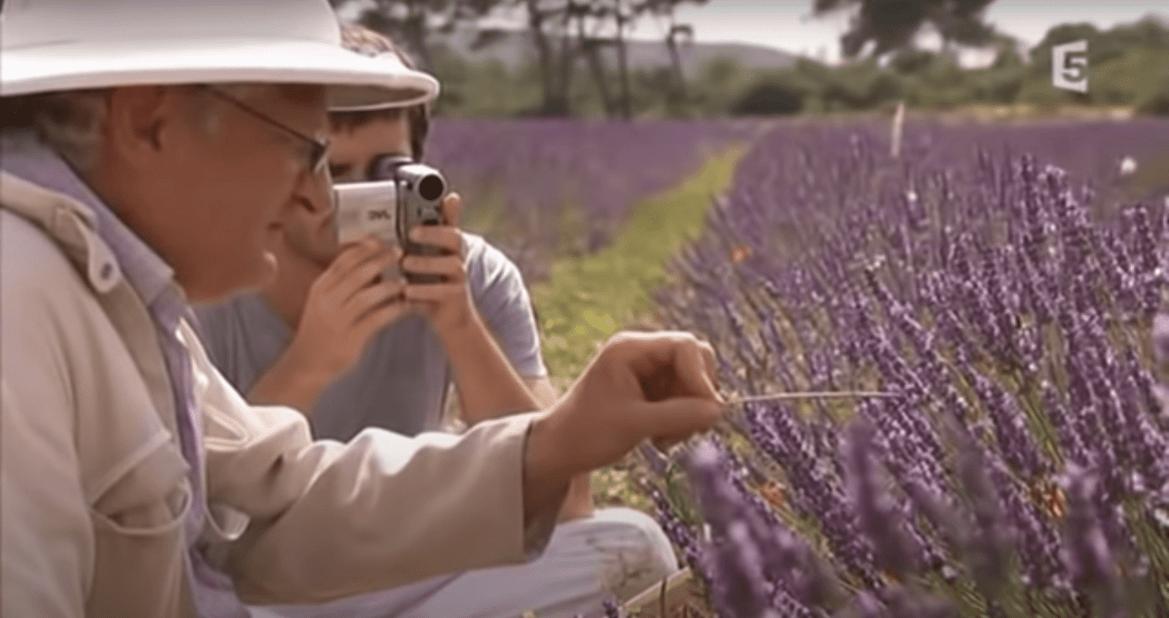 """""""Disparition des abeilles, la fin d'un mystère""""- Résumé du film – Partie 2/2: L'effet sur les abeilles des pesticides, OGM et ondes"""