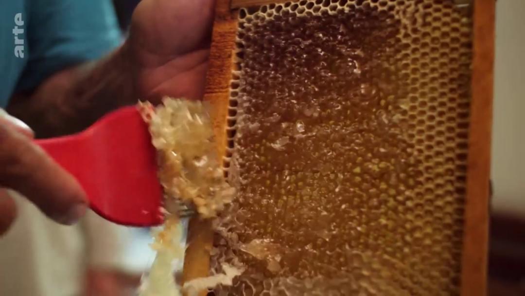 opercule miel