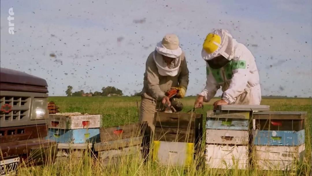 visite ruches