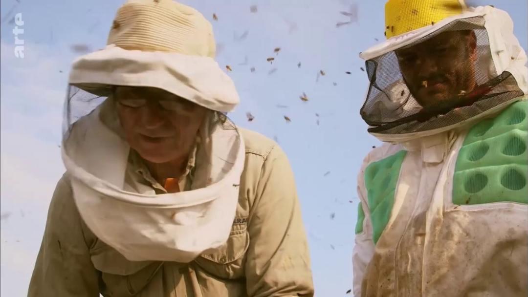 pere et fils apiculteurs