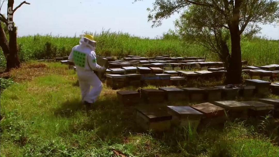 nouveau rucher