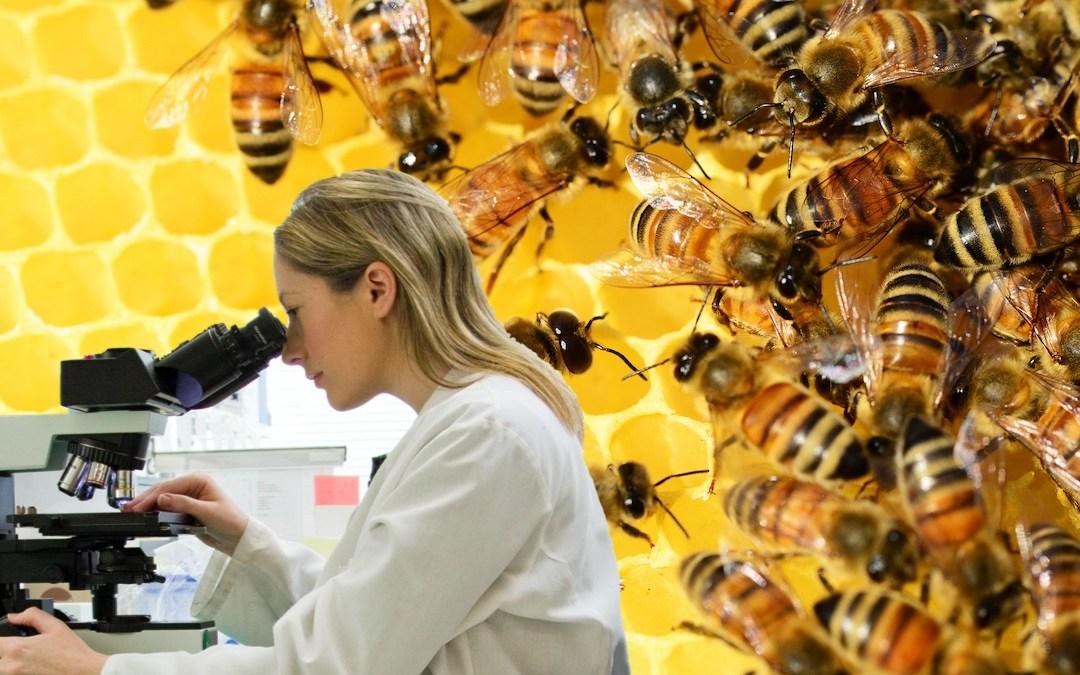 Connaissez-vous le rôle des abeilles selon la science ?