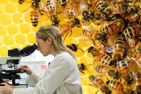 etude abeille