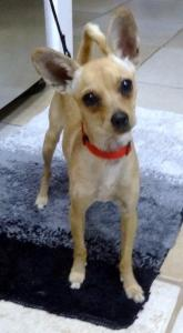 Lily-aa_HendersonShelter_8-3-2014