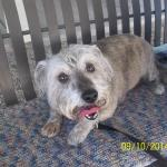 Featured Shelter Animals and Tips