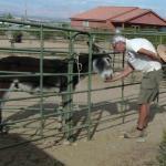 Donkeys help raise money for the Mesquite Cancer Help Society