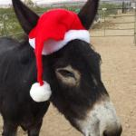 Donkey Foster Program Available
