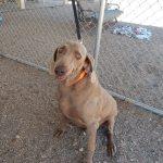 Mesquite Animal Shelter Pet Listing September 15, 2017