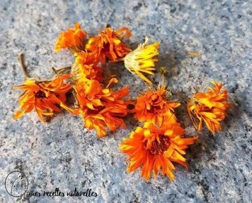 fleurs séchées de calendula