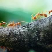 anti fourmi naturel
