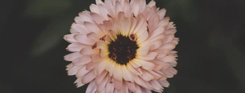 Blog mes recettes naturelles
