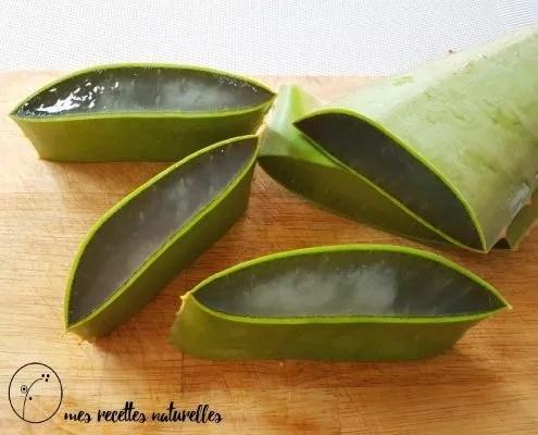 l'aloe vera : une plante aux nombreux bienfaits