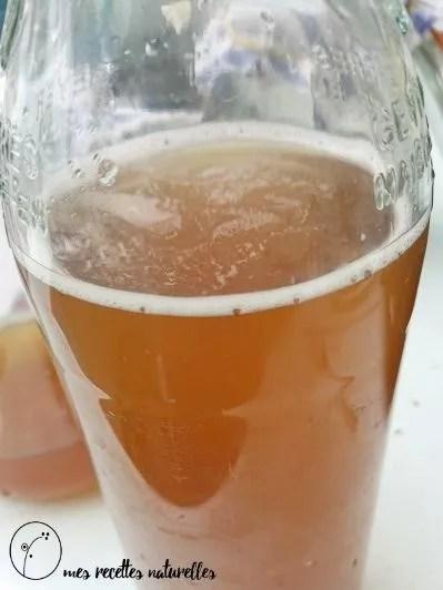 Kombucha : une boisson fermentée probiotique aux nombreux bienfaits