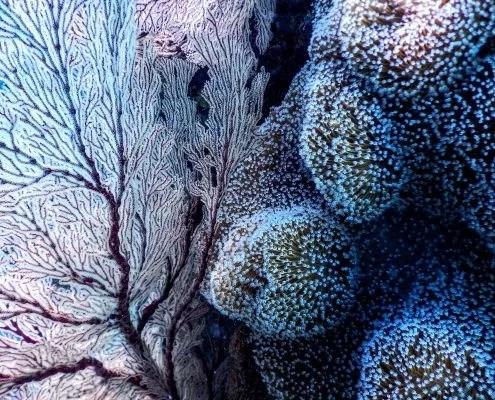 Les filtres UV de votre baume à lèvres sont néfastes pour les coraux