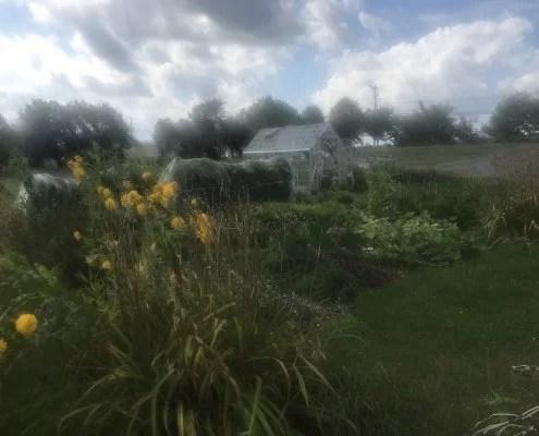 Renée cultive ses plantes médicinales dans son jardin au Québec