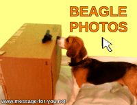 DogPictures BeaglePhotos Button