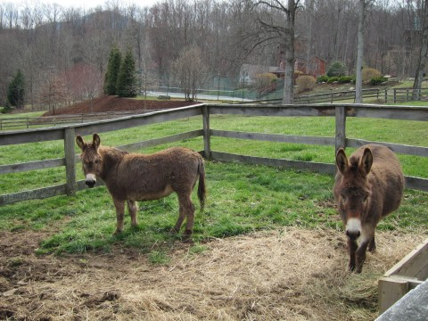 Freeland Donkeys