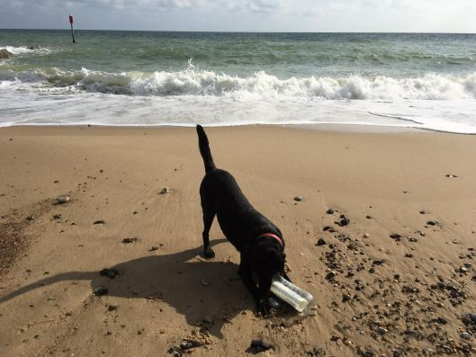 molly-with-message-in-a-bottle-on-the-beach