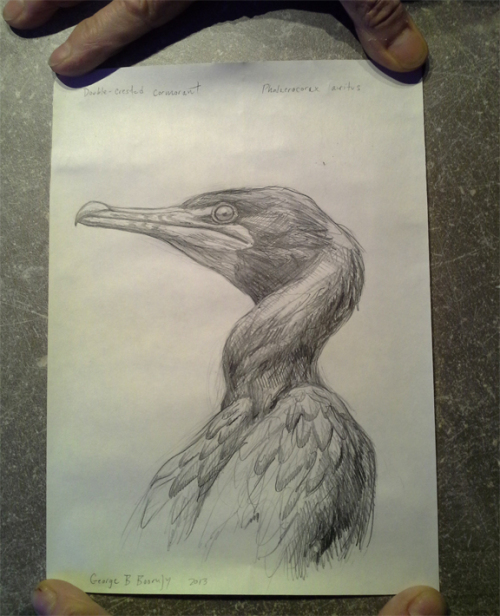 boorujy-bird-sketch-in-bottle-ny-pelagic