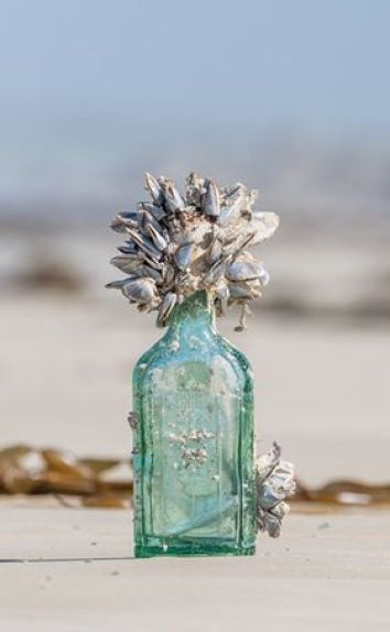 Chinese Message in a Bottle - John Morrissey's Find