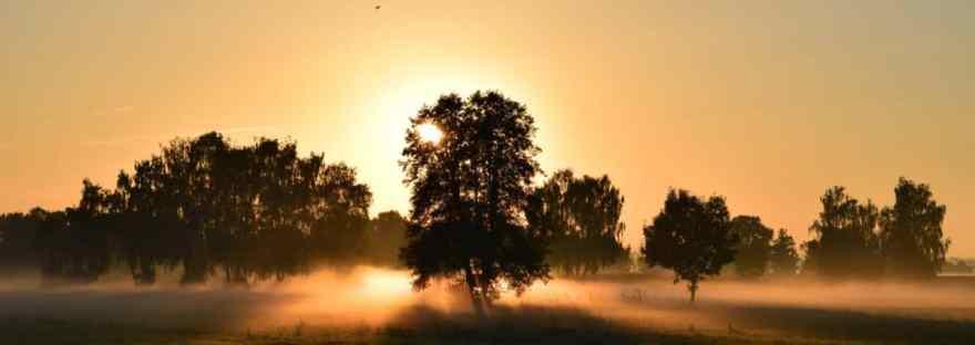sun backlit tree
