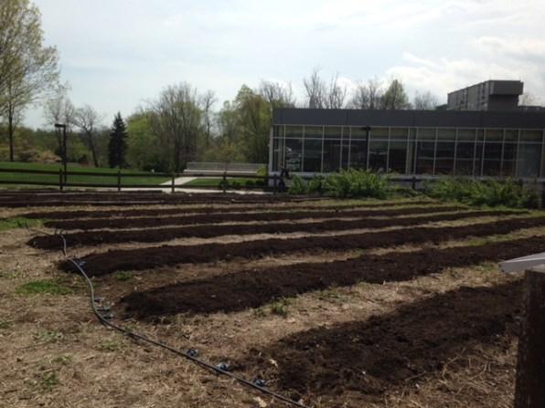 After Upper Garden1