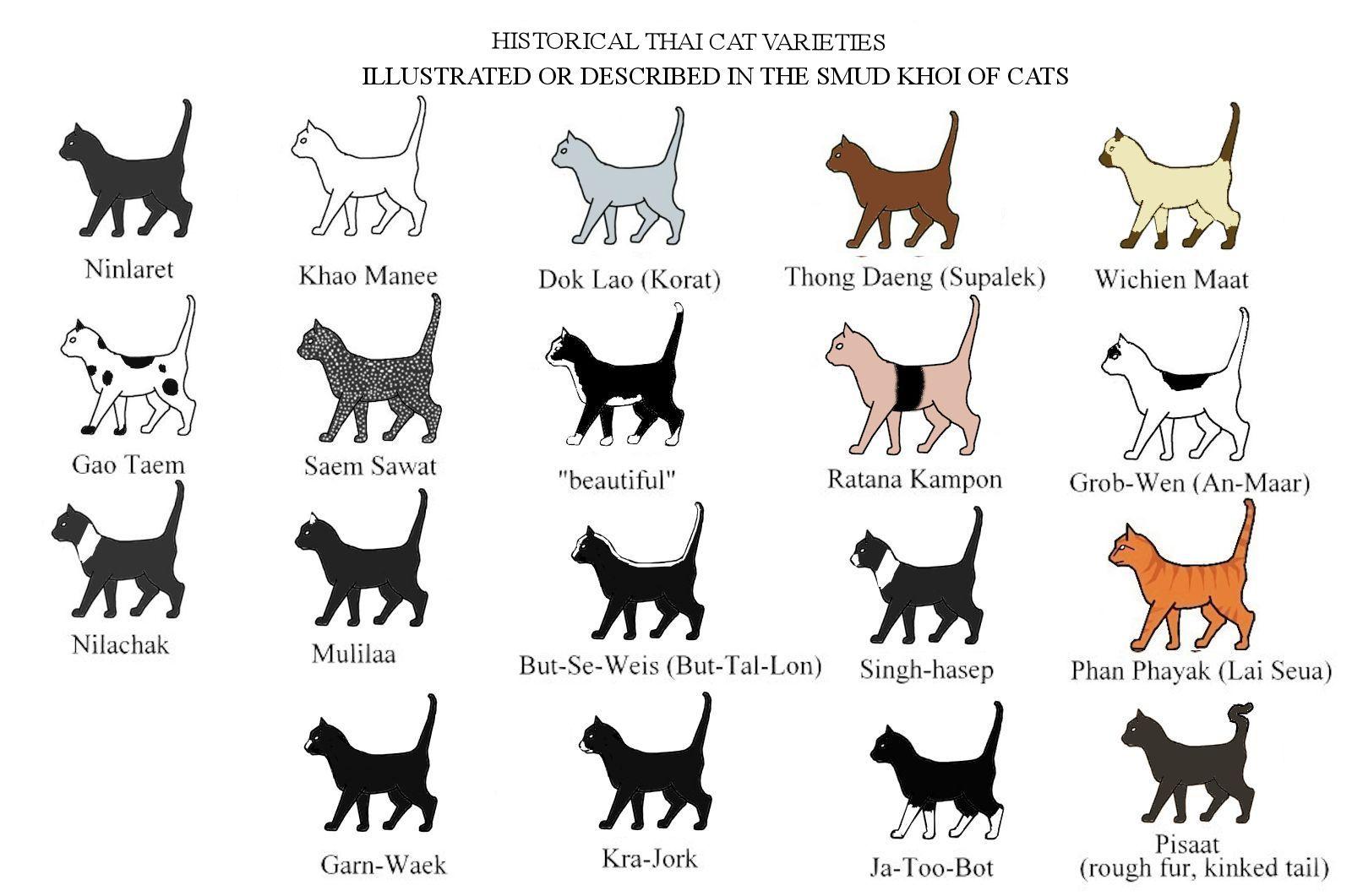 vs black cat