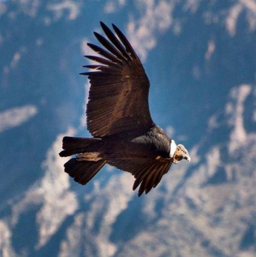 aves exóticas - Perú