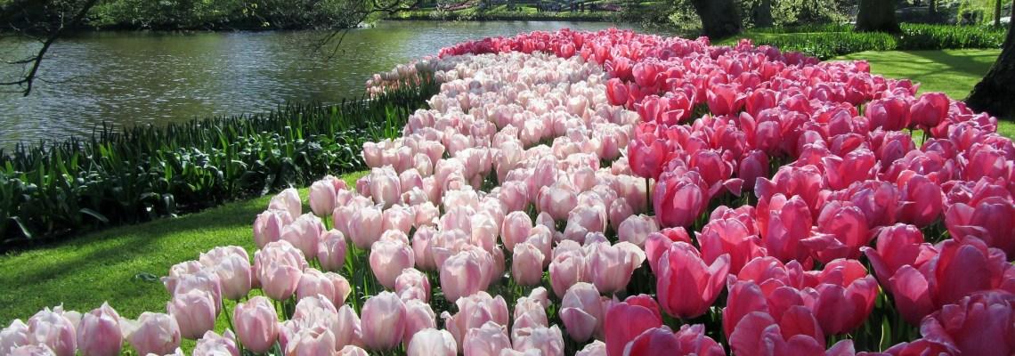 Le parc floral de Keukenhof, le jardin des Tulipes