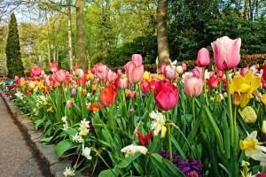 Les Tulipes de Keukenhof