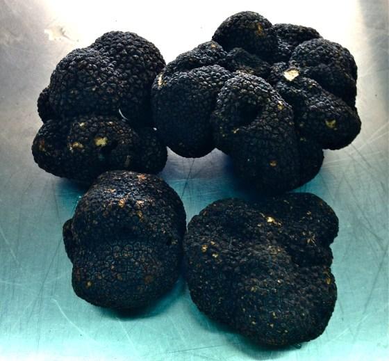 Black Truffles summer