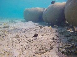 snorkeling-aqaba-mer-rouge-5