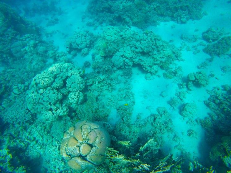 snorkeling-aqaba-mer-rouge-6