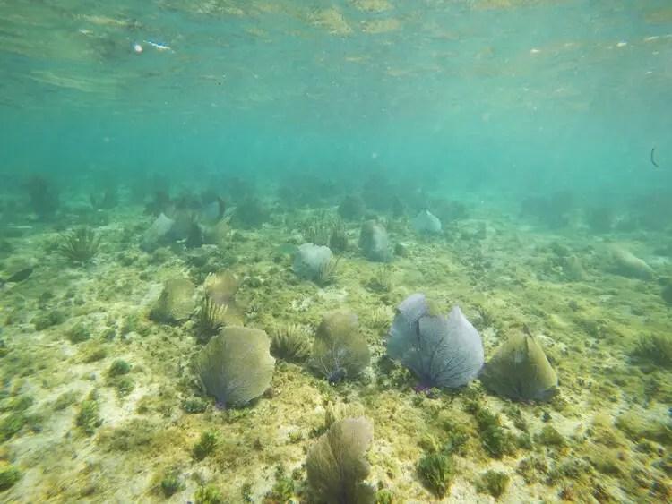 snorkeling isla Cozumel