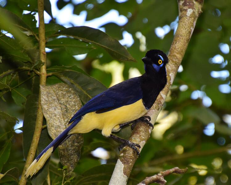 Oiseau Iguazu