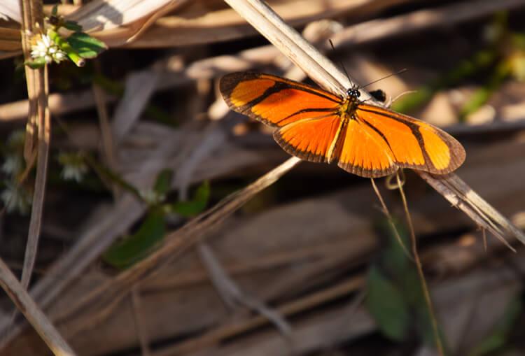 Papillon Iguazu
