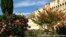 Vaucluse - Avignon - Les remparts