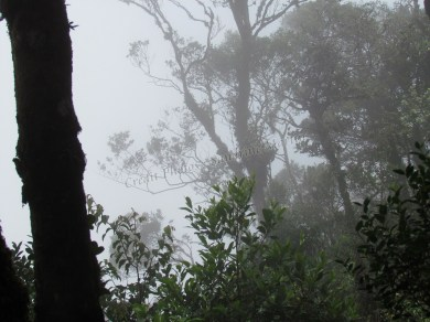 Cameron Highlands - Mossy Forest