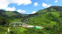 Cameron Highlands - Plantation de thé (BOH)