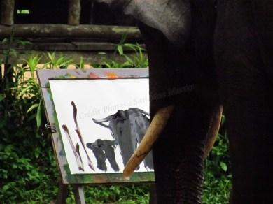 Lampang - Centre de conservation des éléphants - Peintures faites par les éléphants aidés par leur mahout