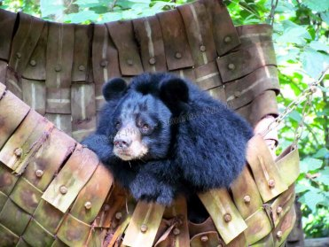 Luang Prabang - Cascade 'Tat Kuang Si' - Centre de conservation des ours