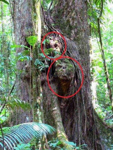 Parc national Nam Ha - Journée rando, 'tête d'ET'